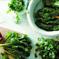 Salat, Salat und noch mehr Salat